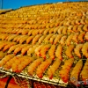 Drying Shrimp