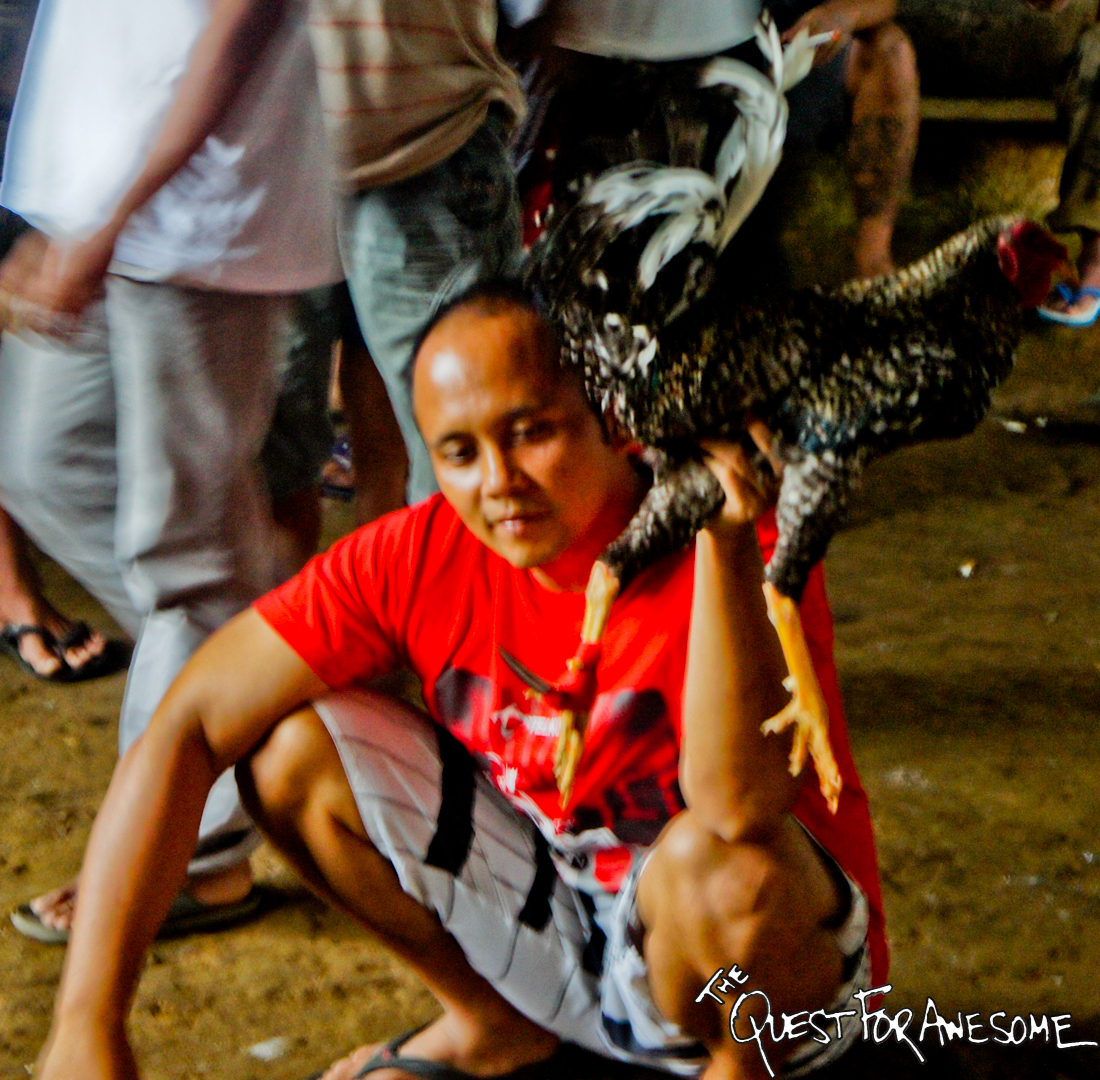 Indonesia Cockfight