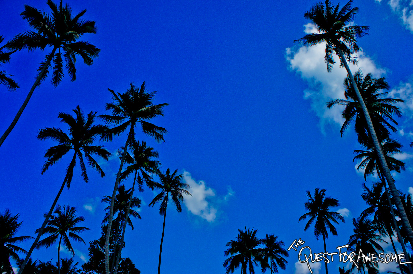 Thailand Palm Trees