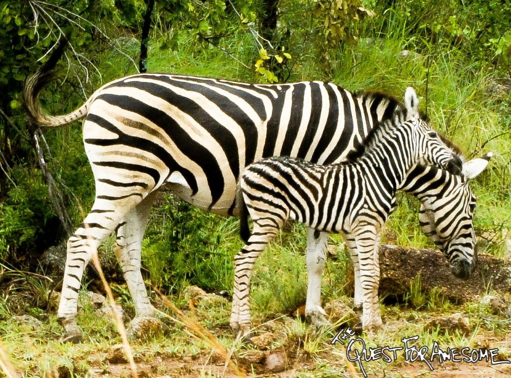 Pilanesburg Game Reserve